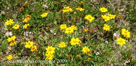DSC_0027ABCD-YellowWildFlowers-1