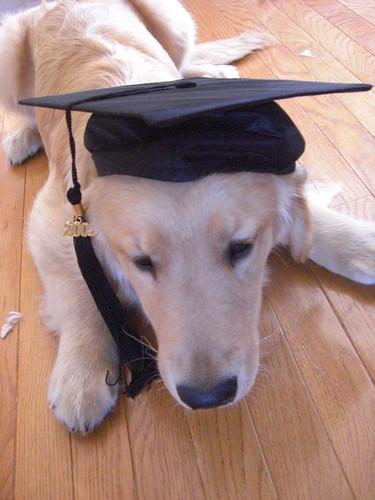 Substitute Graduate Photo 1