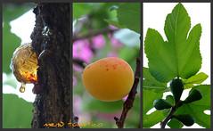 Collage 3 di fiori Picnik