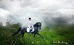 GMHA: Asher of Blackwater Run... (Isabelle Ann) Tags: horse caballo cheval photographer isabelle cavallo cavalo pferd blackbeauty blackhorse equine equus paard friesian dressage mostbeautiful equineart isabelleann isabelleanngreen equestrianart equinephotographer artistichorse isabellegreen gmhadressagedays equitationart asherorblackwaterrun isabellegreenphotography isabelleannphotography isabelleannhorses equineartist