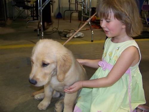 C4 & the golden pup