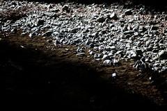 Water/Stone (Pedro Silvares) Tags: california camera usa nature water stone river unitedstates pebble muirwoods 50mmf18d muir d80 nikond80 stockcategories