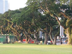 trees @ the padang (studio-s) Tags: church skyline skyscraper landscape temple football singapore soccer cricket esplanade littleindia artmuseum merlion fortcanning thedurians perakhotel thepadang hawkerstands