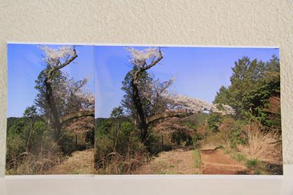写真用紙光沢の比較