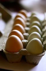 (The Noisy Plume) Tags: eggs hens fresheggs thenoisyplume