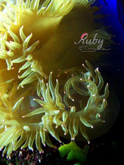 Monaco_aquarium_coral_2
