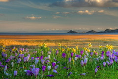 Happy St David's Day! (J Samuel) Tags: uk flowers sea lighthouse beach swansea wales spring sand crocus mumbles daffodils wfc stdavidsday blackpill jamessamuel