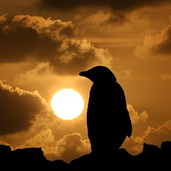 Penguin silhouette (Heaven`s Gate (John)) Tags: cruise sunset sun snow black bird ice expedition station silhouette yellow clouds penguin penguins gentoo creative beak feathers dramatic antarctica imagination discovery avian bornfree paradisebay orangered 100faves 50faves mvdiscovery 10faves paradiseharbour 25faves johndalkin heavensgatejohn theunforgettablepictures amirantebrown reseasch penguinsilhouette