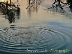 Rippling Pond