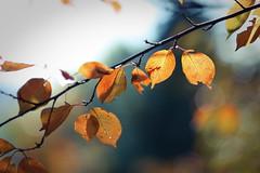 Fall Comeback (DSLR_MANIA) Tags: autumn fall leaves eos leaf korea ef1635mmf28lusm seoul southkorea eos1d canon1d canonef1635mmf28lisusm canonef1635mmf28l eos1dmark3 canon1dmark3 fall2008 dslrmania