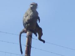 Sudafrica (clmb75) Tags: viaggi sudafrica