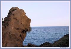 EL LEON TRANQUILO (antonioanvie) Tags: flores mar murcia animales toro margaritas playas rocas pavos fotografias mazarron bolnuevo elleontranquilo