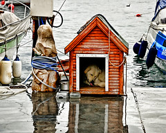 Home My Sweet Home (E.L.A) Tags: street sleeping sea dog reflection home nature animal turkey outdoors photography spring nikon rainyday homeless poor citylife istanbul explore mostinteresting raining soe d80 abigfave saariysqualitypictures