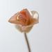 0903 flowers #5