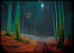 vor Alferzhagen - art version (NPPhotographie) Tags: wood mist abstract tree art fog forest germany way path magic creative fairy dust oberberg mystic abigfave magicalforest platinumphoto vanagram artofimages bestcaptureaoi magicunicornverybest