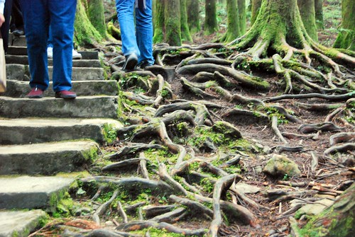 roots, alishan