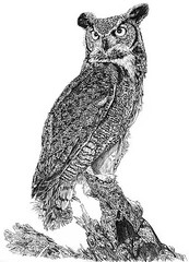Great Horn Owl (ctang) Tags: art nature drawing wildlife owl wildlifeart owldrawing greathornowl