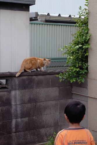 Today's Cat@20090503