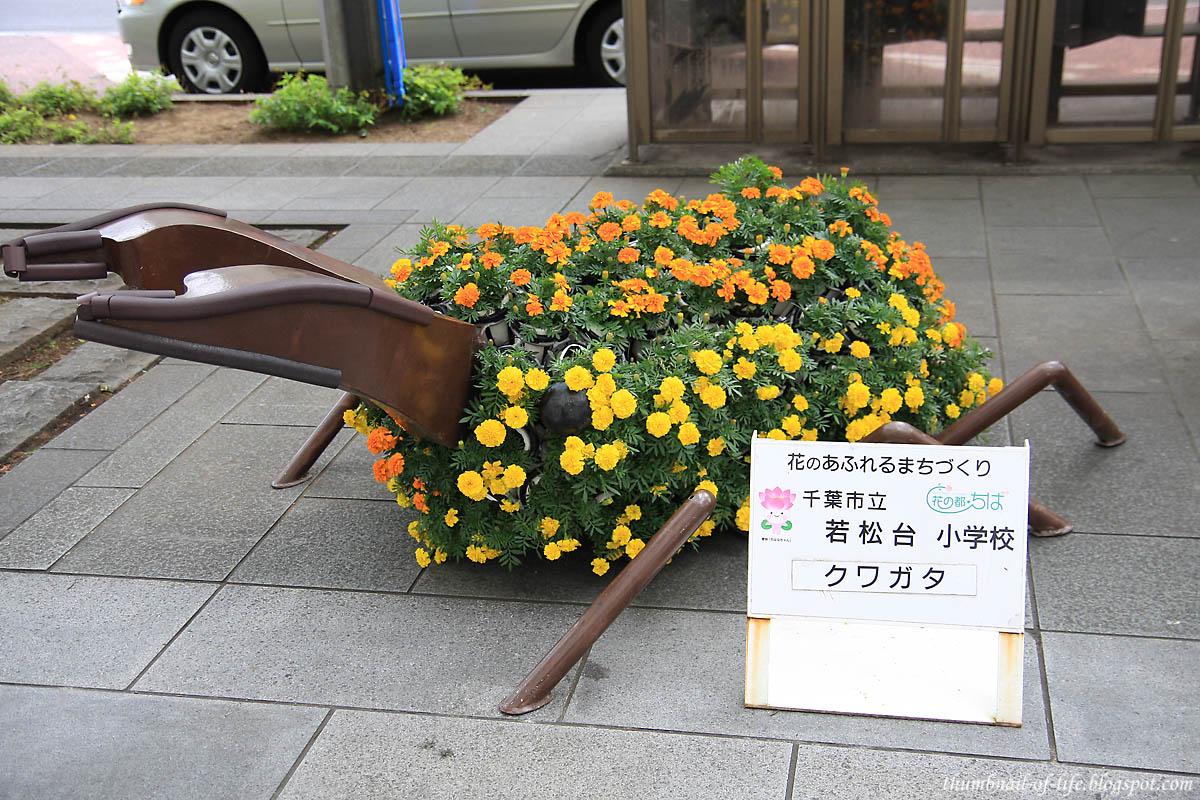 Stag Beetle (Kuwagata)