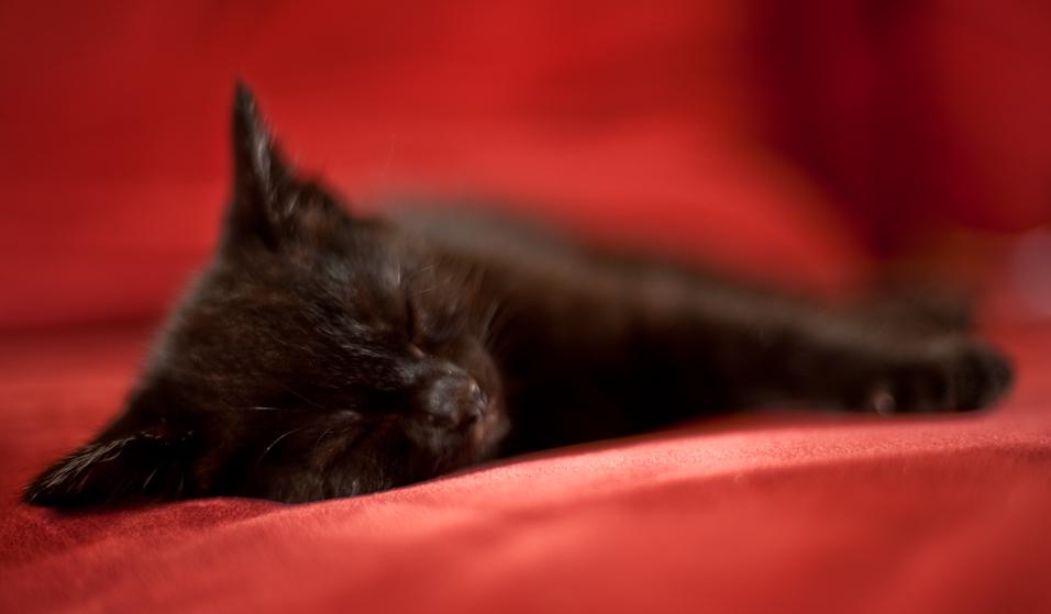 Soft & Sleepy