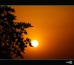 SOLWM..bring forth your FRUITs. (Jes Reyes Photography) Tags: world light jes nature beauty by shine inspired your risen watcher bassman arise totalphoto isaiah601 concordians simplysuperb ilustrarportugal solwm