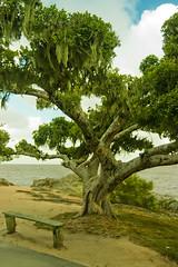preenchimento (VanMagenta) Tags: brazil tree brasil do so sul loureno meridional vanmagenta