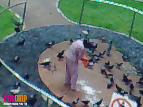 Old woman feeds pigeons and crows illegally in park, chases student away