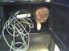 Sub-optimal feline storage series