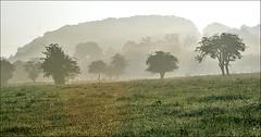 Fin de brume ! - End of fog ! (capitphil) Tags: morning summer mist tree fog belgium belgique t arbre brume matin wallonie brouillatd