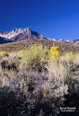Looking Up From the Green Church Road (Bob Kent) Tags: landscape sierra hwy395 highsierra 395 highway395 owensriver