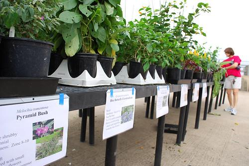 HMNS Fall Plant Sale