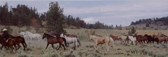 Horses (Hear and Their) Tags: montana roundup cattle drive horses ranch herd