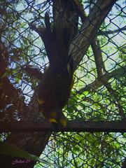 De cabeza (Piccola Rude .::::.) Tags: aviario ixtapaluca fg28022009