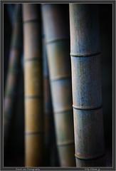 Nogawa Bamboo