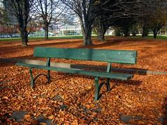 Los colores del otoño (Cristina Bruseghini de Di Maggio) Tags: park plaza parque parco verde green torino hojas italia cristina banco otoño marron ocre banca secas abigfave