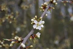 Shy spring (elenikiokia) Tags: wild white flower spring afternoon sunday shy ferrara wanderings gualdo naturesfinest supershot theunforgettablepictures vosplusbellesphotos
