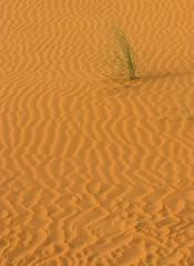 Following Lines (Yousef Al-Asfour) Tags: abstract art nature beautiful yellow wow photography nikon kuwait nikkor top25fav magical coolest nikondigital highlight soe breathtaking peacefull photooftheday naturesfinest thebigone wonderworld blueribbonwinner supershot vwc nikonians outstandingshots specnature hfv nikonstunninggallery specanimal abigfave sellective outstandingshotshighlight kuwaitphotographer worldbest shieldofexcellence platinumphoto anawesomeshot anawesomeshotb impressedbeauty aplusphoto superbmasterpiece naturefinest natursfinest diamondclassphotographer flickrdiamond ysplix amazingamateur excellentphotographerawards jalalspagesnaturealbum creativephotographers theunforgetablepicture ~vivid~ naturewatcher kvwc bfgreatesthits kuwaitvoluntaryworkcenter  nginationalgeographicbyitalianpeople yousefalasfour alasfour2000