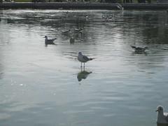 paris bird tuileries walkonwater