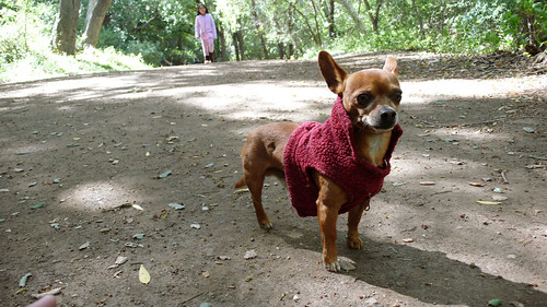 Random, Yet Well Dressed Chihuahua at Nojoqui Falls