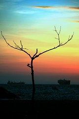 Another Lonely Tree (Kool2bBop) Tags: africa blue sunset pordosol red orange verde green azul flickr laranja can vermelho explore amarelo mind yelow hive digitalphotos 2010 angola luanda cabinda encarnado nzambi fotografiadigital bighugelabs anotherlonelytree kool2bbop jmhamill arvoresolitria mangole flickrhivemind palancanegra can2010 belezaangolana bettertobealonethaninbadcompany antessodoqueemmcompanhia canorangeangola2010 angolaphotographers fotografosdeangola angolaemimagens imagesfromangola angolaemfotos fotosdeangola photosofangola mwangolefotos photographsfromangola