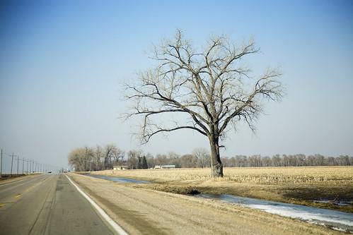 Lone Tree 032009