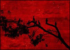7   (Alfredo11) Tags: sunset sky tree bird texture textura heron colors birds clouds landscape arbol atardecer costarica colours paisaje colores ardea pajaros cielo nubes alfredo tones siluetas silhouttes treatment tratamiento garza tonos nikond300