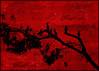 ¨ 7  ¨ (Alfredo11) Tags: sunset sky tree bird texture textura heron colors birds clouds landscape arbol atardecer costarica colours paisaje colores ardea pajaros cielo nubes alfredo tones siluetas silhouttes treatment tratamiento garza tonos nikond300