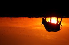 Mundo do avesso (Eduardo Amorim) Tags: sunset brazil southamerica brasil atardecer kuh cow rind tramonto sonnenuntergang cattle cows bull bulls ox prdosol toros ganado pelotas tori oxen mucca toro riograndedosul pampa poniente bois khe vache coucherdesoleil yara vaca vacas campanha brsil vaches boi buey entardecer touro amricadosul mucche poente paniolo taureau boeuf vieh stier amriquedusud boeufs buoi sudamrica rinder gado suramrica amricadelsur touros bueyes sdamerika taureaux mue costadoce bestiami btail americadelsud americameridionale eduardoamorim stiere littlestoriespicswithsoul