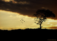 An old day passes, a new day arrives. (Claudio.Ar) Tags: trees santafe color tree argentina birds sunrise amigo friend rboles day sony flock pjaros amanecer chapeau rbol fields dsc campos pampa h9 bellisima greatphoto themoulinrouge blueribbonwinner bandada fineartphotos gigashot worldbest platinumphoto aplusphoto citrit simplyperfect dreamphoto theblackbirds fleursetnature goldsealofquality betterthangood thegardenofzen dragongoldaward world100f natureselegantshots multimegashot sognidreams magicdonkeysbest photoexel mastersgallery claudioar claudiomufarrege lesamisdupetitprince goldenart paololivornofriends naturescreations phvalue artofimages saariysqualitypictures sensationalphoto veryspecialpictures themonalisasmile imagesforthelittelprince musicsbest mdtbmasterpiece arttouch thenewselectbest flickrenvythebesttm mmmilikeit mbpictures daarklands bestcapturesaoi yourwonderland oracope oracobb magicunicornverybest