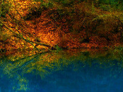Srknyt / Dragon Lake_PICT9097 (jobcibi) Tags: blue lake color tree nature forest germany deutschland minolta explore wald soe baum breathtaking fa t dimagez1 vob abigfave ultimateshot platinumheartaward goldstaraward erd breathtakinggoldaward 100commentgroup daarklands