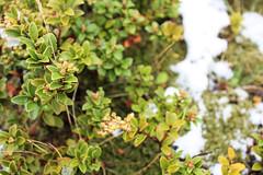 img_0908-2 (SheelahB) Tags: newzealand mountcook aoraki