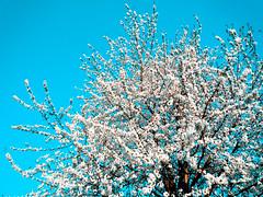 ... (louizaloo) Tags: nature closeup fleurs extérieur printemps balade ext extrieur