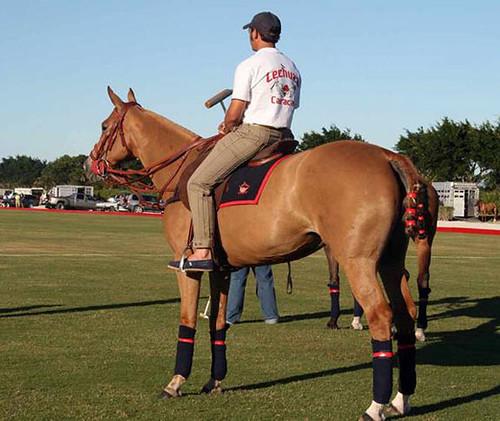 Selenium Overdose Caused Deaths of Polo Horses | ScienceBlogs