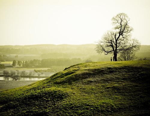 33 Uplifting Photos of Green Fields